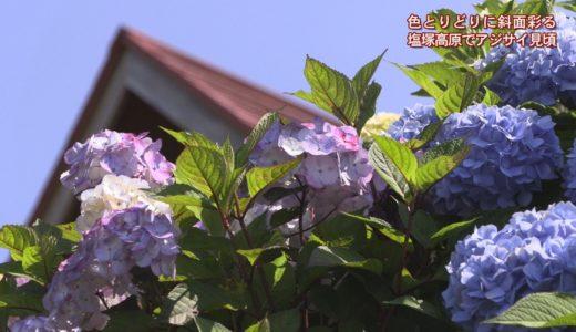 (取材日:6月25日、取材地:塩塚高原キャンプ場)