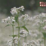 (取材日:9月13日、取材地:東祖谷名頃)