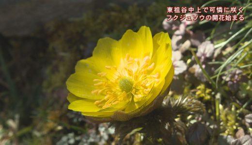 (取材日:2月12日、取材地:東祖谷中上)