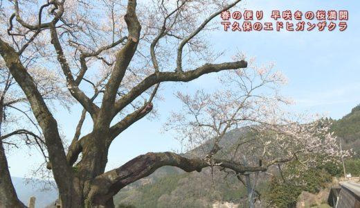(取材日:3月27日、取材地:井川町井内東)