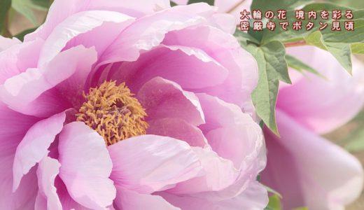 (取材日:4月23日、取材地:池田町西山)