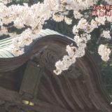 (取材日:4月7日、取材地:山城町下名 両皇神社)