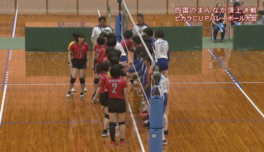 (取材日:5月19日、取材地:池田総合体育館)