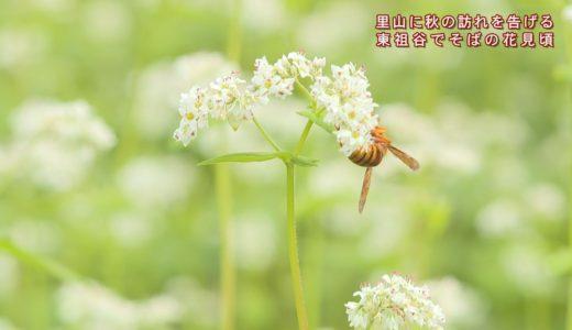 (取材日:9月16日、取材地:東祖谷久保)