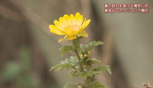 (取材日:2月10日 取材地:東祖谷中上)