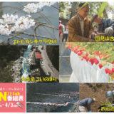 3/28(土)~4/3(金)番組表