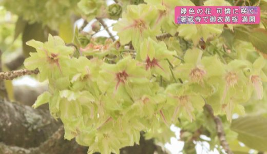 (取材日:4月20日 取材地:箸蔵寺)