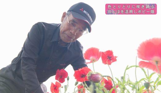 (取材日:5月21日 取材地:三野町清水)