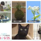 9/19(土)~9/25(金)番組表