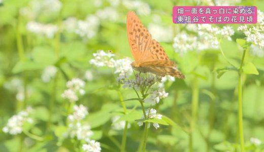(取材日:9月15日 取材地:東祖谷久保)