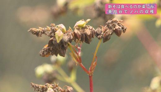 (取材日:10月18日 取材地:東祖谷 久保)