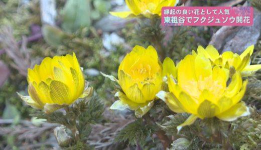 (取材日:2月8日 取材地:東祖谷中上)