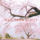 日常の風景の中で 「信正の二本桜を見に行こう」