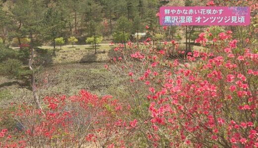 (取材日:4月27日 取材地:黒沢湿原)