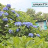(取材日:6月14日 取材地:塩塚高原キャンプ場)