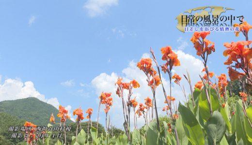 日常の風景の中で「日差しを浴びる情熱の花」